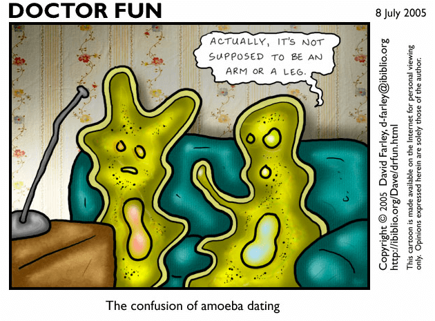 The 'Doctor Fun' webcomic, 8th July 2005, two amoebas sit on a sofa watching TV, one reaches towards the other saying 'Actually, it's not supposed to be an arm or a leg.' The caption below reads 'The confusion of amoeba dating'. Copyright David Farley, 2005.